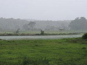 Green vistas - Nagzar