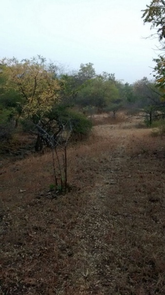 trek-trail